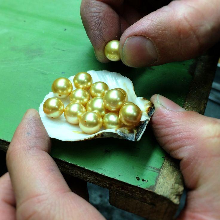 Rare South Sea golden pearls