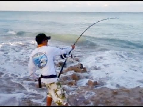208 Best Images About Fishing On Pinterest Shark Attacks