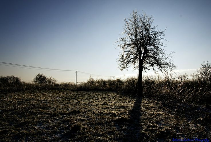 tree by Sebastian Lacherski on 500px