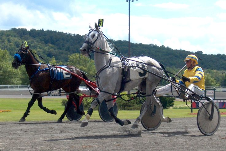 Standardbred Harness Racing Horses, Raceway fun to bet