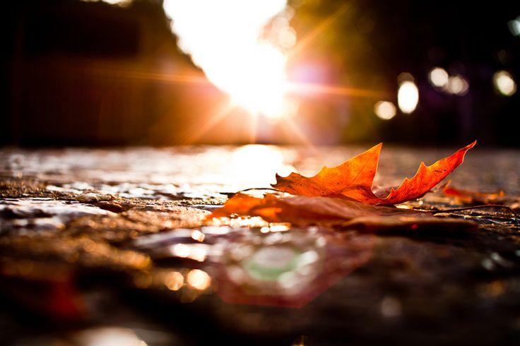 Ni demasiado frío ni apenas calor, ni verano ni invierno, el #Otoño es, como la primavera, una estación del año que siempre va asociada al cambio, un período de transición y, en definitiva , un momento lleno de oportunidades. photo by: Andrés Nieto Porras https://www.flickr.com/photos/anieto2k/6182352133