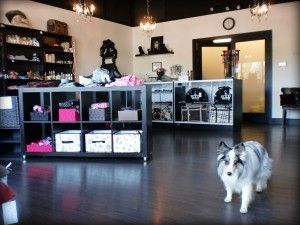 17 best images about my dream business puppy daycare for A cut above grooming salon