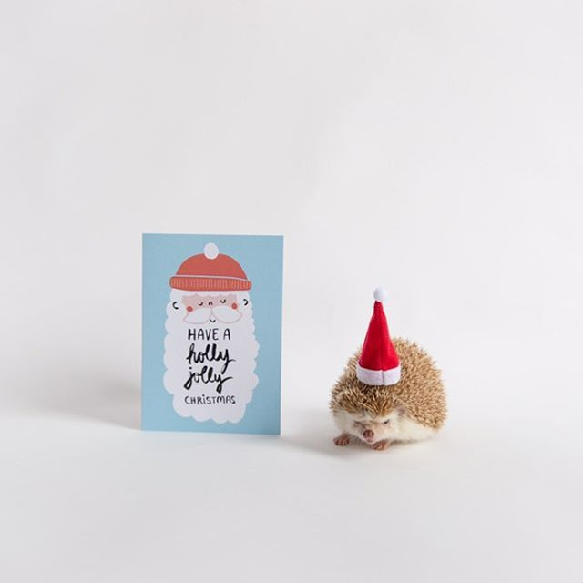 From the JustGreet family + @ameliahedgehog to yours - have a holly jolly Christmas! 💕🎄🎅 // 🎨 by @oneplusonedesign