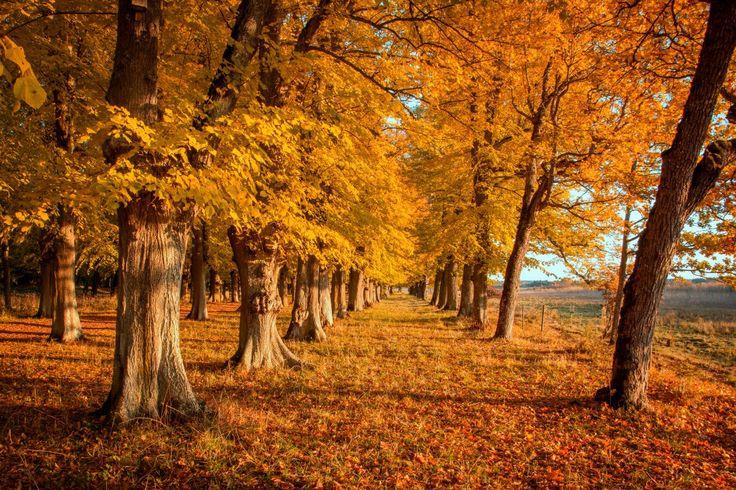 October colors i Sweden