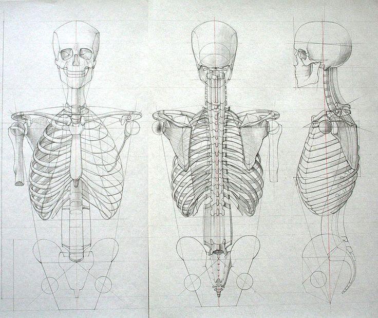 Studi di anatomia umana