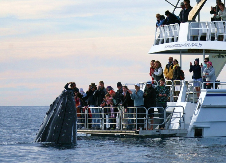 One of those incredible moments… #WhaleWatching #QLDBlog #HerveyBay