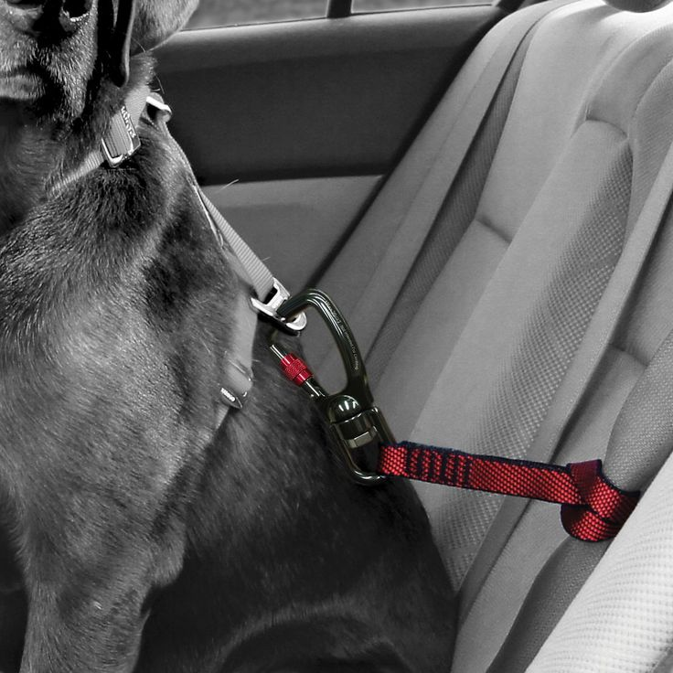 Secure fido on every trip, in every vehicle, with this heavy duty seat belt tether. Working in conjunction with the [Kurgo Tru-Fit Smart Harness](http://www.chewy.com/s?dept=all&query=Kurgo+Tru-Fit+Smart+Harness&nav-submit-button.x=-653&nav-submit-button.y=-70) this tether offers the same seat-belt security with an easy swivel movement. Best for restraining large dogs in the vehicle who are known to never sit still!