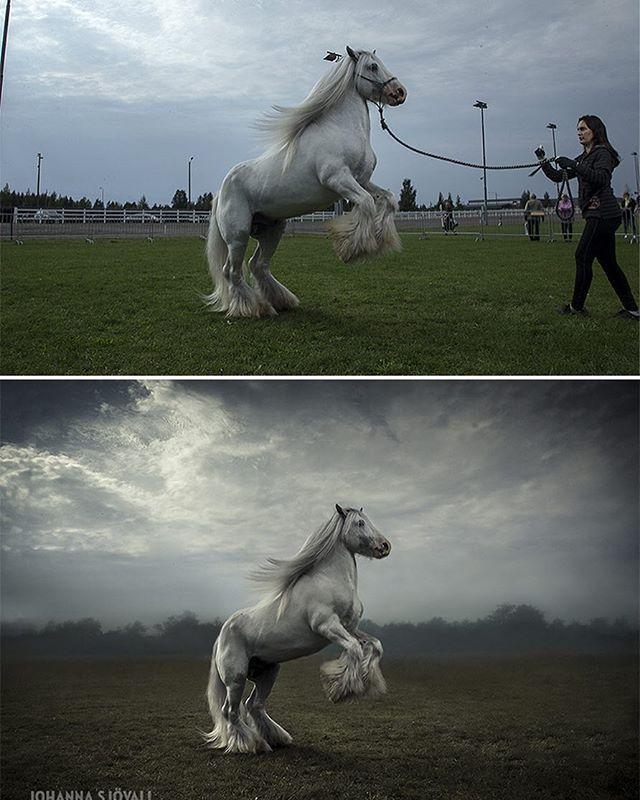 Before and after. #equine #photoshop #photoedit #beforeandafter #equinephotography #equinephotographer #horsephoto #horsephotography #horsephotographer #horsepic #theblueboss #hevoskuva #hevosvalokuvaus #hevosvalokuvaaja #ennenjajälkeen #hevonen #ori #johannasjovall #boeunder3k