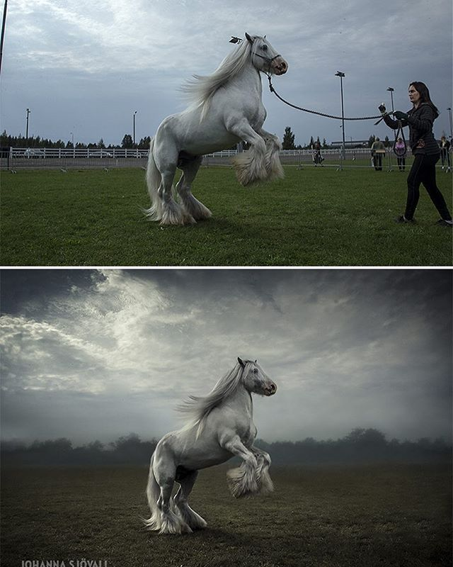 Before and after. #equine #photoshop #photoedit #beforeandafter #equinephotography #equinephotographer #horsephoto #horsephotography #horsephotographer #horsepic #theblueboss #hevoskuva #hevosvalokuvaus #hevosvalokuvaaja #ennenjajälkeen #hevonen #ori #johannasjovall #boeunder3k