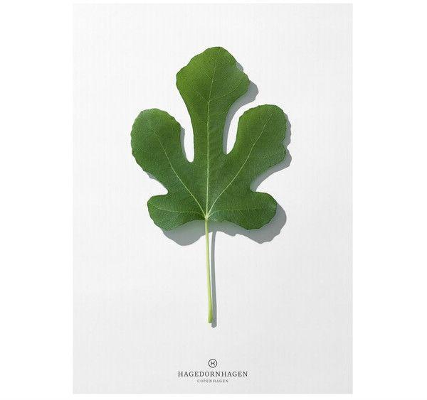 Plakat Hagedornhagen- liść | Designzoo