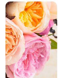 Go visit your florist or order them online @ http://www.parfumflowercompany.com/