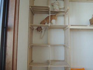~すのこ猫タワーの進化~お金をかけず夢の猫ハウスに一歩前進! - きゃっとぱーてぃーハウス