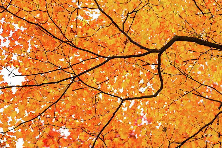 Olga Olay Photograph - Golden Branches by Olga Olay #OlgaOlayFineArtPhotography #ArtForHome #FineArtPrints #Fall #Homedecor