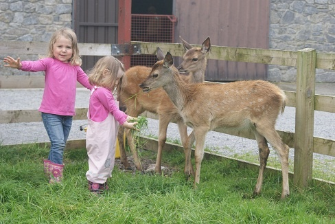 Meet Bambi and his friend at Glendeer Pet Farm. http://visitroscommon.com/GreatTimesTogether/Greatoutdoors/GlendeerPetFarm.aspx