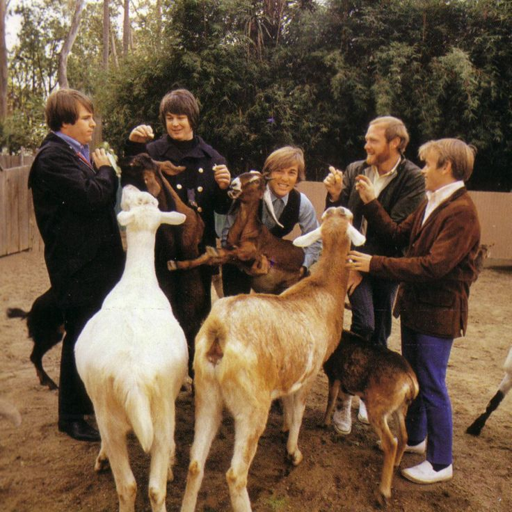 beach boys | Beach Boys 70s --from the brilliant Pet Sounds