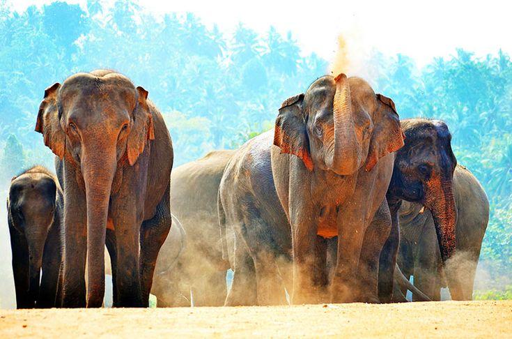 Se elefanter och leoparder i Yala nationalpark