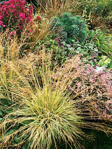 Tuffed Hairgrass, native to pacific NW. Love the modern landscaped lawn, with minimal grass to mow! From Better Homes and Gardens.