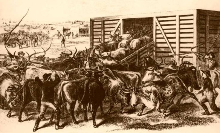 Loading Texas Cattle in Abilene, Kansas.   Courtesy of Frank Leslie's Illustrated Newspaper, 1871.