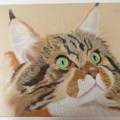 Tête de chat en gros plan au pastel sec