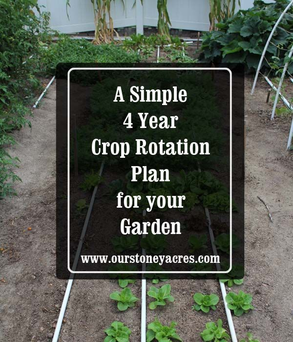 Crop rotation in a home garden is more important than many people think. This simple 4 year crop rotation plan will keep your garden and soil healthy.