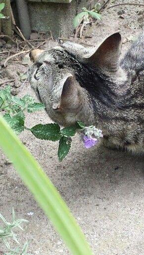 Ziva heerlijk stoned worden van kattekruid.  Maar onder tussen wel loeren na een merel .