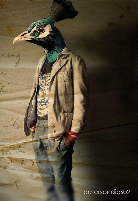 Peacock fashion model