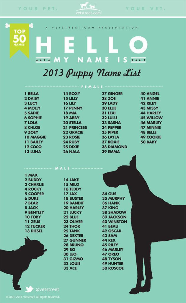 Most popular puppy names for 2013 are... http://shine.yahoo.com/pets/most-popular-puppy-names-2013-135800100.html