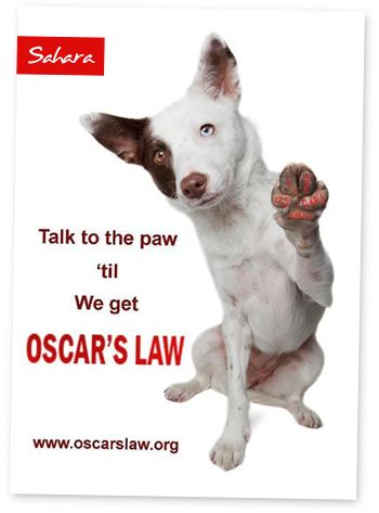 Oscar's law - if you don't know about this project to abolish puppy farms, do yourself a favour and read about it. Get educated about where that puppy in the window really comes from. I WANT OSCAR'S LAW!