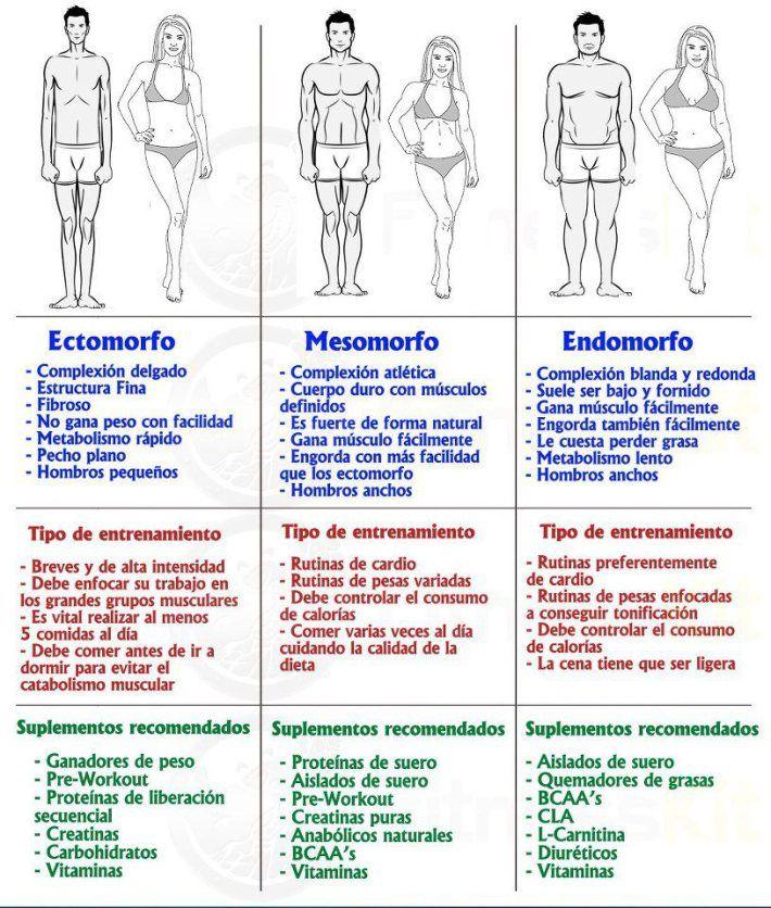 Los tipos somáticos: Ectomorfo, Mesomorfo y Endomorfo Clasificación de tipos somáticos Seguramente habréis observado cómo algunas personas tienen tendencia a engordar a lo más mínimo que descuiden …