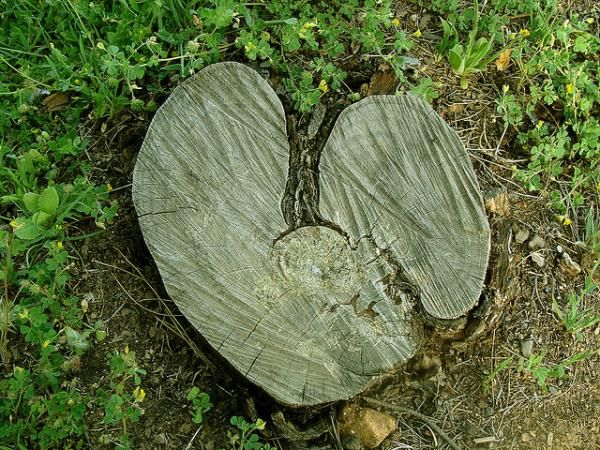 Stumped on love.