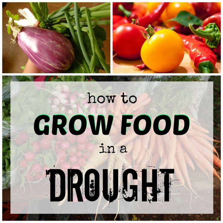 ~Drought isn't the ideal condition for vegetable growing, but you can still succeed~
