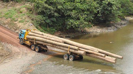 rainforests-deforestation-borneo