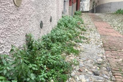 #genova È solo gennaio, ma le erbacce hanno già invaso la città. Facile immaginare cosa accadrà in primavera e in estate. Lo scorso anno le erbacce invasero tutto, scalzando acciottolati e sollevan…