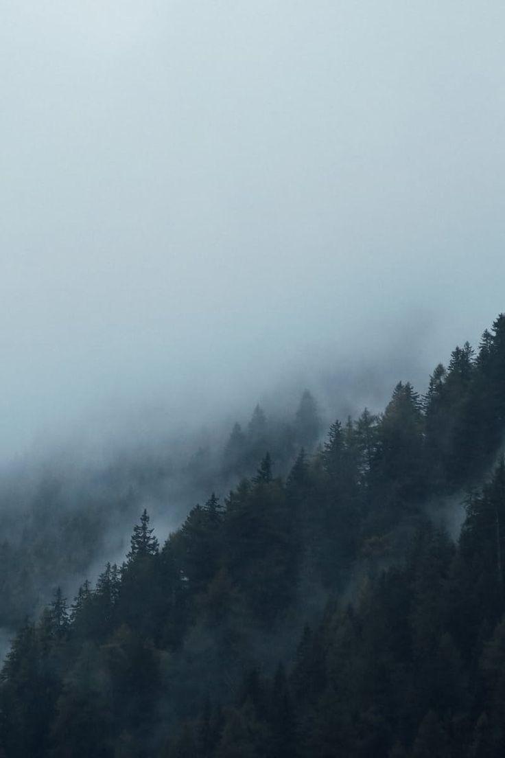 Fog Around Mountain With Trees