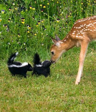 Oh! Deer...