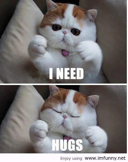 I need hugs.. roger cat strikes again!