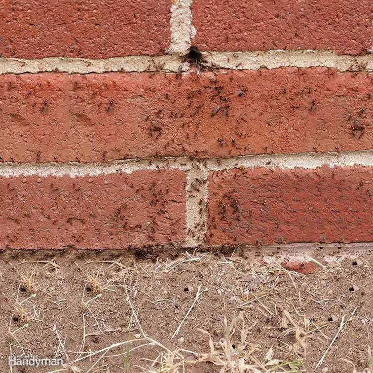 If you frequently see ants in the same area on the siding, there's probably a nest in there. Look for holes in the siding where ants are crawling in and out. The holes are often located between bricks where mortar has fallen out, under lap siding or in cracks in stucco. Once you locate the nest, or the vicinity of the nest, spray the area with an insecticide containing bifenthrin. Image courtesy of Mike Merchant, Texas A&M