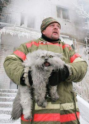 【画像】猫を火災現場から救出した消防士たちの写真12枚