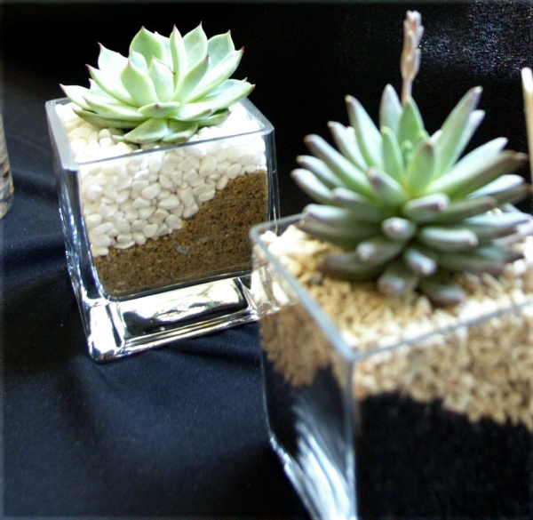 Tips on how to design with succulents: Modern Centerpieces, Container Gardens, Dining Centerpiece, Articles, Succulent Plants, Succulents Cynthia, Crafty Projects, She S Crafty