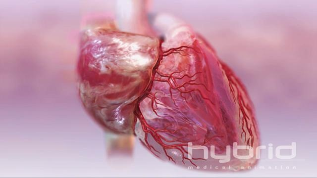 225 Best My Beating Heart Images On Pinterest: 17 Best Images About Teaching: Human Body