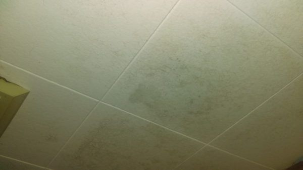 Ceiling Mold Growth Learn The Cause And How To Prevent It Environix In 2020 Bathroom Heat Lamp Heat Lamps Light Therapy Lamps