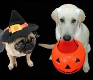 What are some great dog Halloween themed names? We came up with a list of dog favorites. Check out the most popular dog Halloween names.
