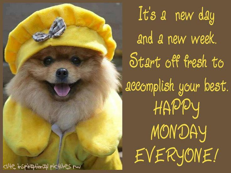 Happy Monday!