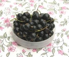 Ribes nigrum 'Öjebyn', svarta vinbär. FinE-sort. Medeltidig, stora bär. Zon V.