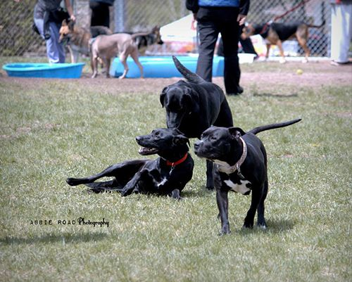 Indoor Dog Parks Grand Rapids Mi
