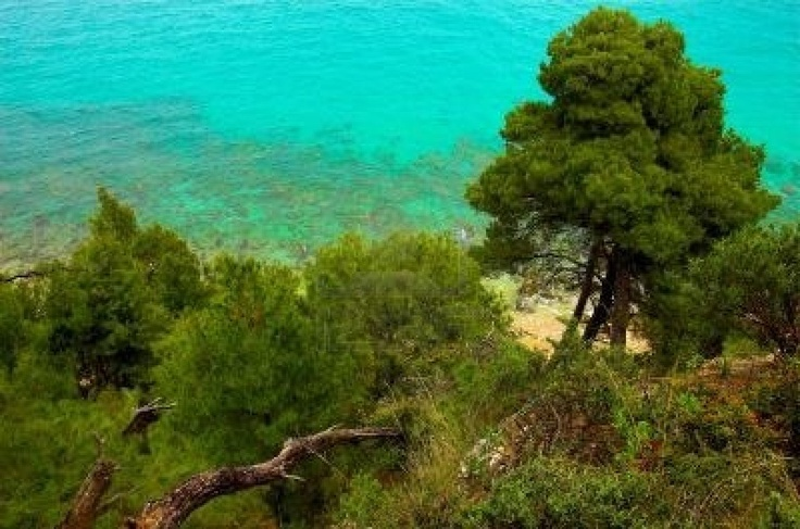 Pines near the seaside, Hilkidiki, Greece Stock Photo - 454192