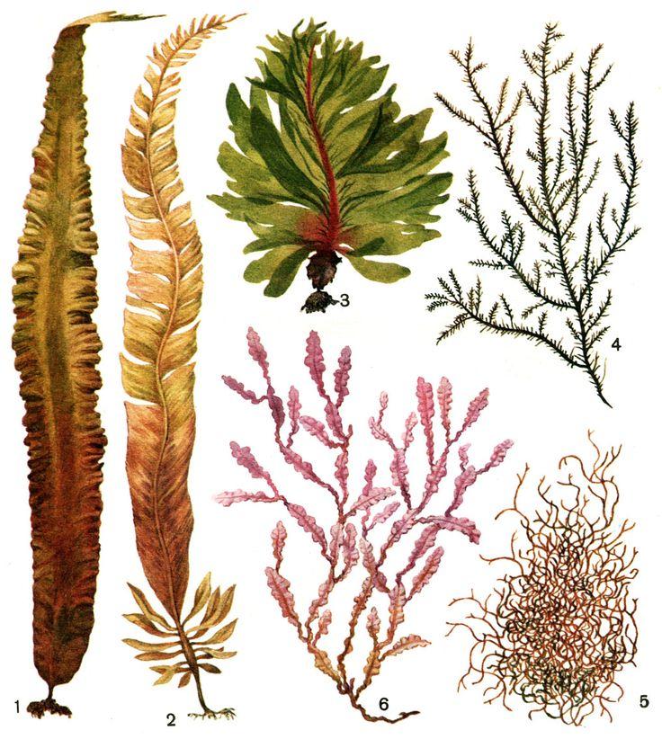 Цветы у водорослей картинки