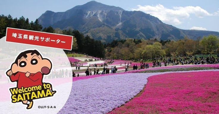 Saitama Prefecture is located to the north of Tokyo. The prefecture's flower, the beautiful primrose, can be found in postcard-quality scenery in Hitsujiyama Park every year from mid-April to early May.  Aside from this, various sightseeing spots are also
