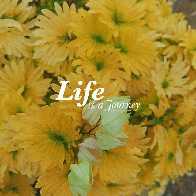 Life is a journey. Instagram username: _i.ea.ds  #exploreyourcapabilities #quote #quotes #life #flowers #yellow #journey