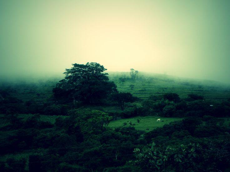 Forêt nuageuse, Honduras